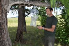 Результаты феромонного надзора за сибирским шелкопрядом в Республики Тыв