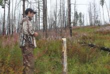 Завершены работы по наземной верификации участков фонда лесовосстановления